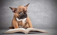 Doggie reading a book