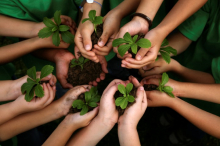 Children's hands in a circle holding newly sprouted plants