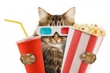 movie cat