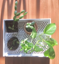 tray of plant cuttings