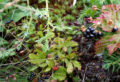 image of berries and other edible items.