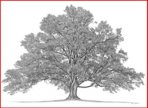 Discover the Roots of Your Family Tree at the library