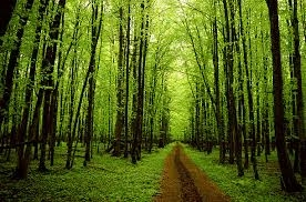 Photo of a green forest