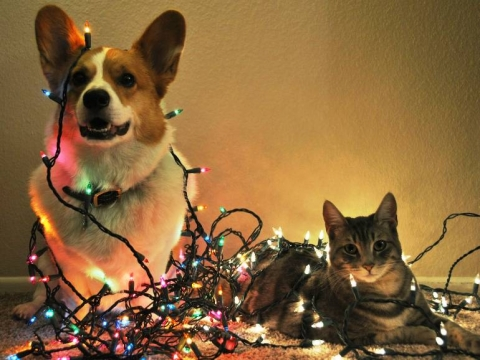 Dog and cat sitting in Christmas tree lights