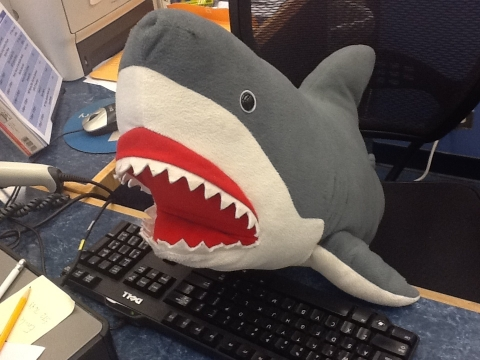 Wallace the library shark