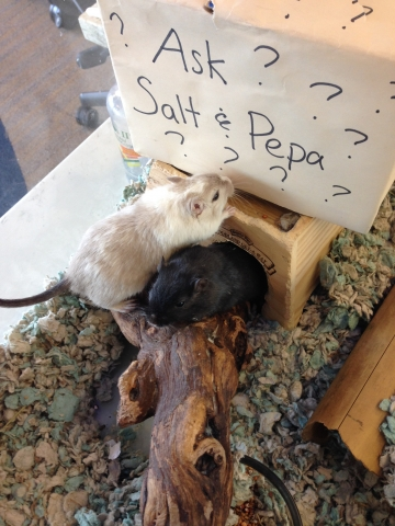 Salt and Pepa with their questions box