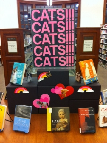 Picture of the Petworth Library Cat display