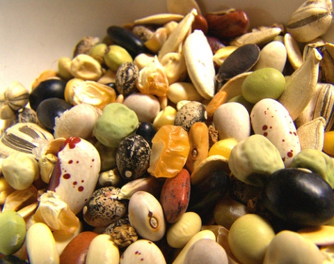 Picture of various seeds