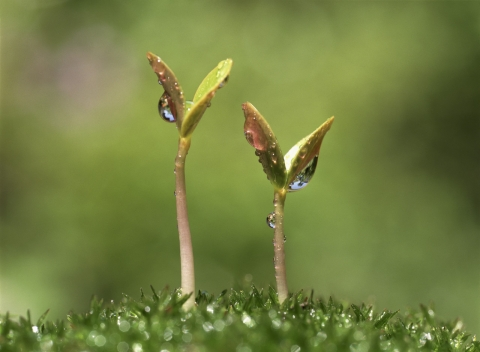 Image of seedlings