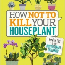 how not to kill a houseplant