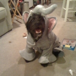 Photo of Buster in his Halloween costume