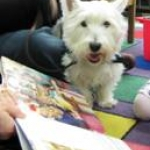 Photo of Pablo the dog at the library