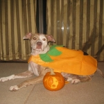 Photo of Susie the dog at Halloween